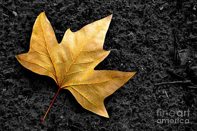 Golden Leaf Photograph - Lone Leaf by Carlos Caetano