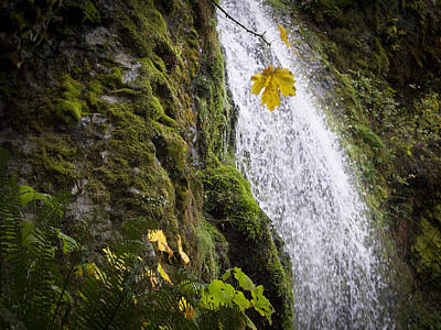 Photograph - Lone Leaf Near Waterfall by Jean Noren