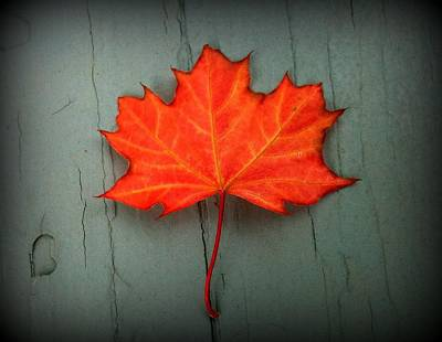 Photograph - Lone Leaf by Suzanne DeGeorge