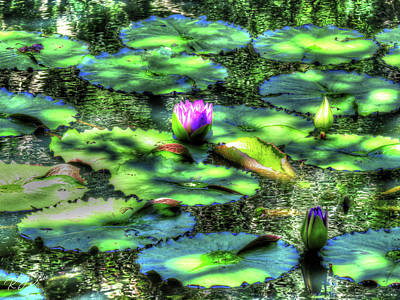 Digital Art - Lone Lily by Kathleen Illes