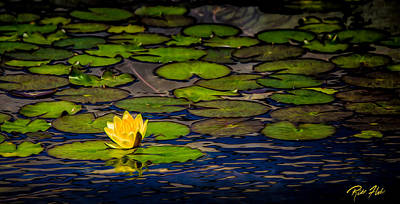 Photograph - Lone Lily by Rikk Flohr