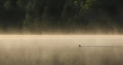 Photograph - Lone Loon by Shari Jardina
