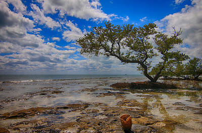 Photograph - Lone Mangrove by Scott Bert