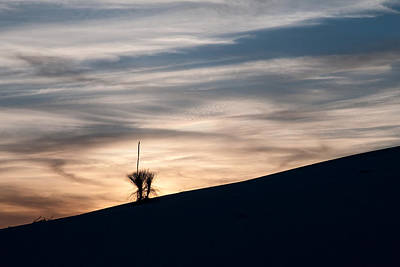 Photograph - Lone by Mike McMurray