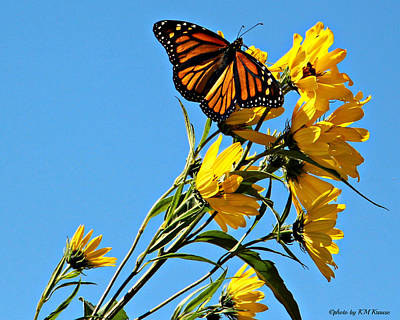 Photograph - Lone Monarch by Kathy M Krause