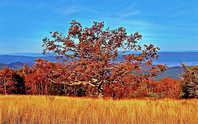 Photograph - Lone Mountain Tree by The American Shutterbug Society