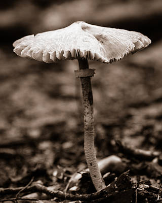 Photograph - Lone Mushroom On The Forest Floor by Chris Bordeleau
