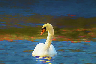Digital Art - Lone Mute Swan. by Rusty R Smith