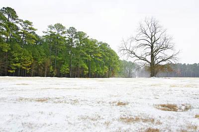 Peter Muzyka Wall Art - Photograph - Lone Oak In Georgia Field by Peter Muzyka