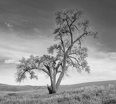 Photograph - Lone Oak In The Palouse Bw by Jerry Fornarotto
