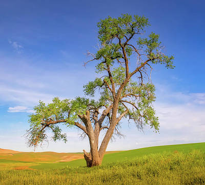 Photograph - Lone Oak In The Palouse by Jerry Fornarotto