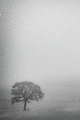 Photograph - Lone Oak In The Rain by Don Schwartz