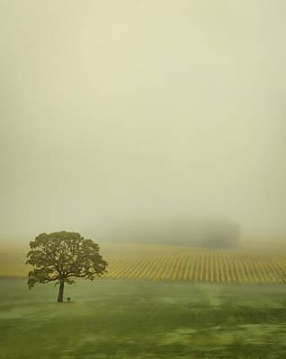Photograph - Lone Oak In The Vineyard by Don Schwartz