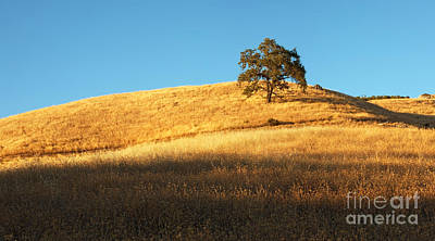 Bello Photograph - Lone Oak Tree by Matt Tilghman