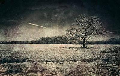 Lone Oak Tree - Wisconsin Landscape Art Print by Jennifer Rondinelli Reilly - Fine Art Photography