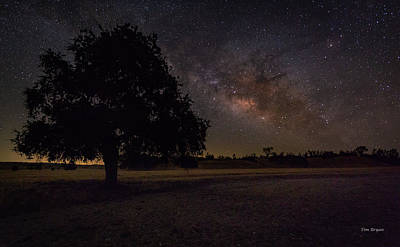 Photograph - Lone Oak Under The Milky Way by Tim Bryan
