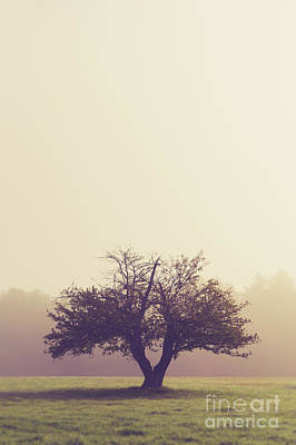 Photograph - Lone Old Apple Tree by Edward Fielding