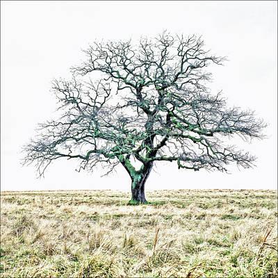Lone Old Oak Hdr 2 Original by Kim Lessel