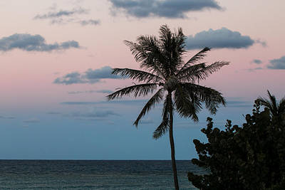 Photograph - Lone Palm At Sunset by E Faithe Lester