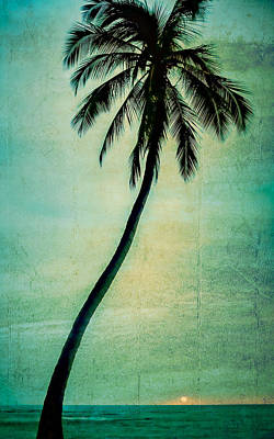 Photograph - Lone Palm by Don Schwartz