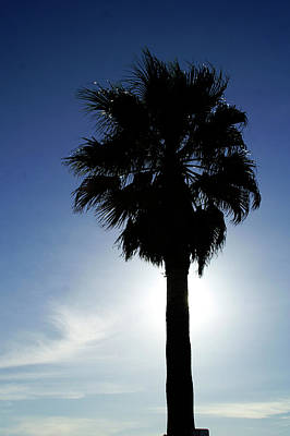 Photograph - Lone Palm by Gary Brandes