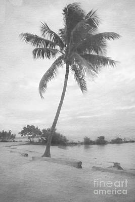 Photograph - Lone Palm Lagoon by Benanne Stiens