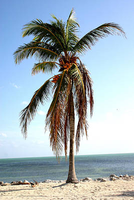 Photograph - Lone Palm by Mary Haber