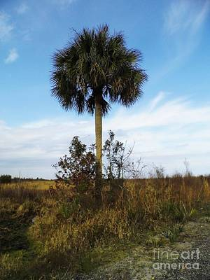 Photograph - Lone Palm On The Prairie by D Hackett