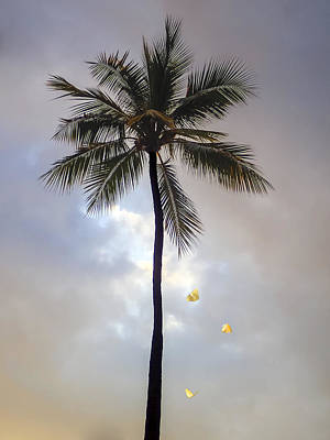 Jimerson Photograph - Lone Palm Tree by Wes Jimerson