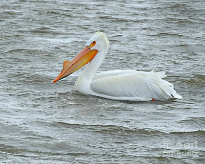 Photograph - Lone Pelican by Kathy M Krause