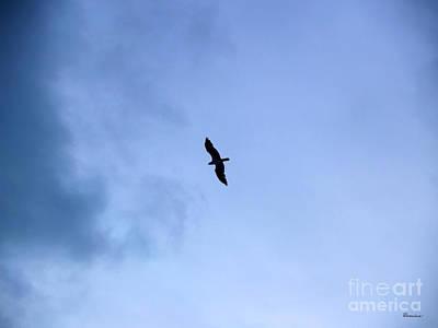 Photograph - Lone Peregrine Falcon Overhead C1 by Ricardos Creations