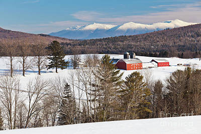 Photograph - Lone Pine Farm Winter by Alan L Graham