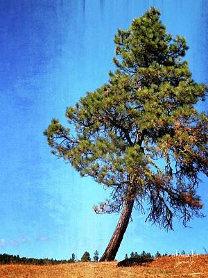Photograph - Lone Pine by Jamie Johnson