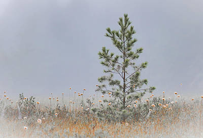 Photograph - Lone Pine by Vance Bell