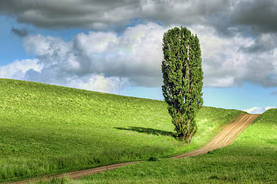 Photograph - Lone Poplar And Road by Nikolyn McDonald