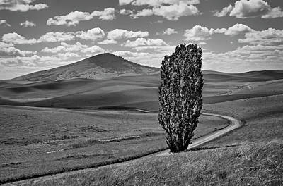 Photograph - Lone Poplar - Steptoe Butte by Nikolyn McDonald