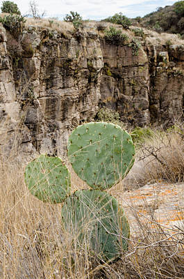 Photograph - Lone Prickly Pear Cactus At The Canyon's Edge. by Rob Huntley