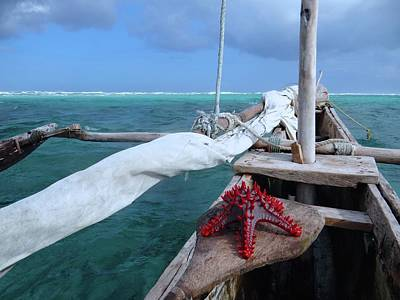 Education By Traveling Photograph - Lone Red Starfish On A Wooden Dhow 1 by Exploramum Exploramum