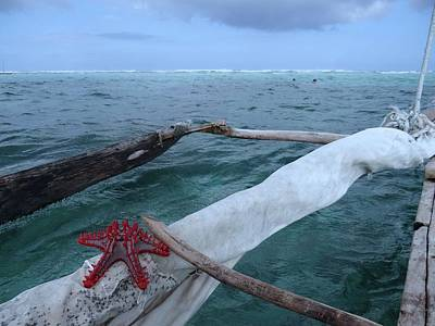 Education By Traveling Photograph - Lone Red Starfish On A Wooden Dhow 2 by Exploramum Exploramum