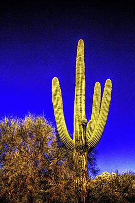 Photograph - Lone Saguaro by Roger Passman