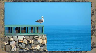 Photograph - Lone Sea Gull by Doreen Whitelock