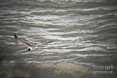 Photograph - Lone Sea Gull by Kim Henderson