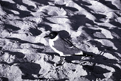 Photograph - Lone Seagull by Gary Dean Mercer Clark