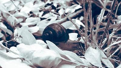 Photograph - Lone Snail by Eddie G