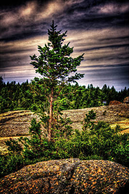 Photograph - Lone Spruce Atop Cadilac Mountain by Roger Passman