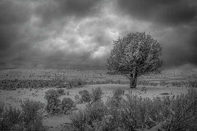 Photograph - Lone Surviving Tree by Bill Posner