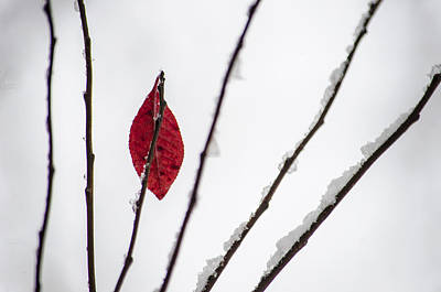 Wintry Photograph - Lone Survivor by Deborah Smolinske