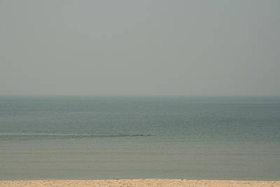 Photograph - Lone Swimmer by Werner Hammerstingl
