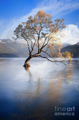 Photograph - Lone Tree 1 by Scott Kemper