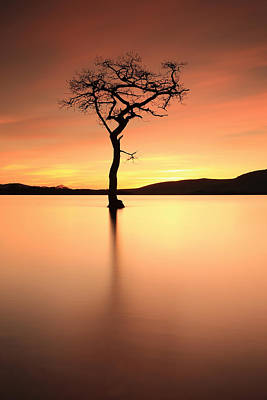 Photograph - Lone Tree Afterglow by Grant Glendinning